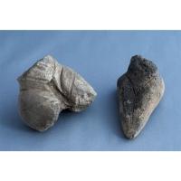 Casa colectiilor - Sala 1 -  idoli neolitici 03.jpg